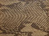 KING COBRA NW 2657